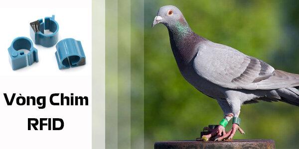 Ứng dụng vòng chim RFID